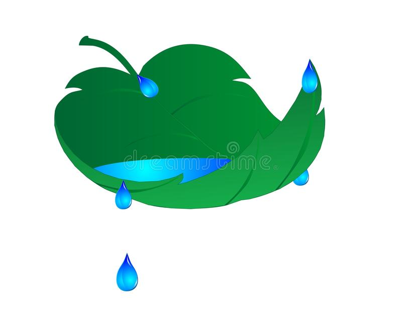 Leaf with water droplets illustration. A single leaf, with water in it, and droplets flowing off of it, over a white background vector illustration