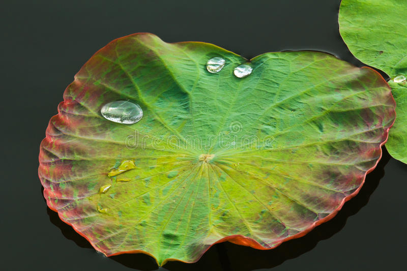 Download Leaf with Water Drops stock image. Image of closeup, pattern - 16100883