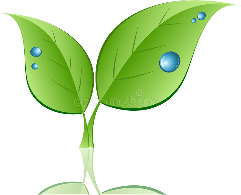 Download Leaf with water drops stock vector. Image of leaf, object - 7975718