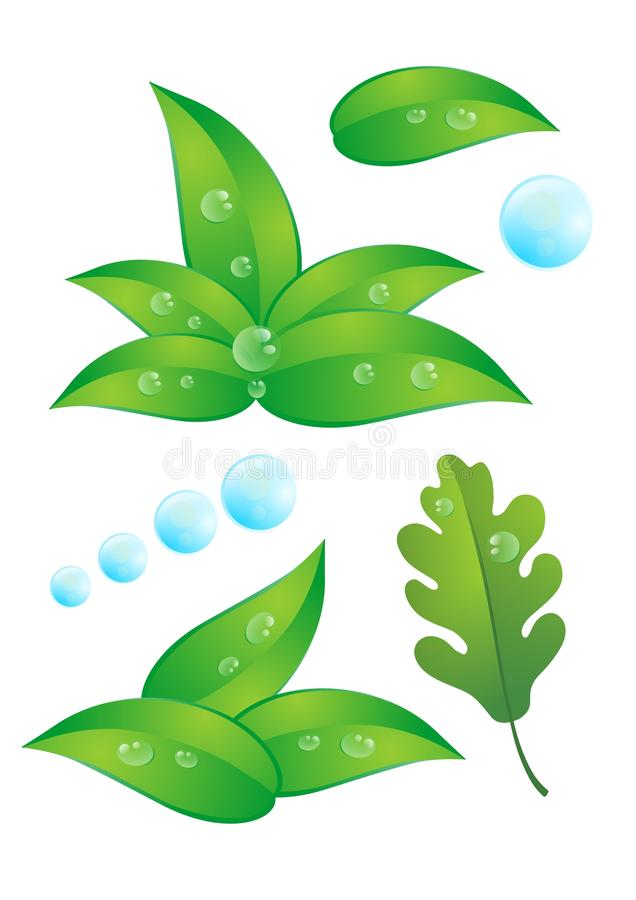 Leaf and water drops vector illustration