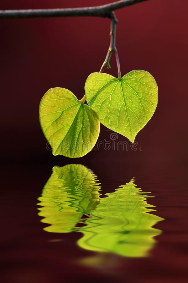 Download Leaf and water stock photo. Image of water, leaves, natural - 38560104