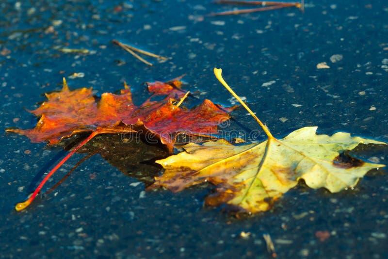 Leaf, Water, Maple Leaf, Autumn stock photos