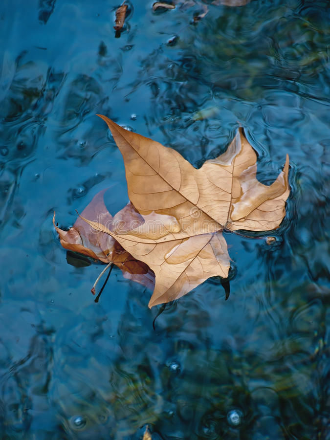 Leaf at water. One lonely brown dry leaf floating on the clear blue-cyan water surface. In reflection on the water can see the reflection of clouds and sky stock photography