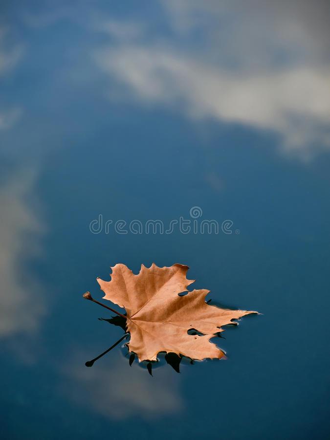 Leaf in water (puddle) royalty free stock image