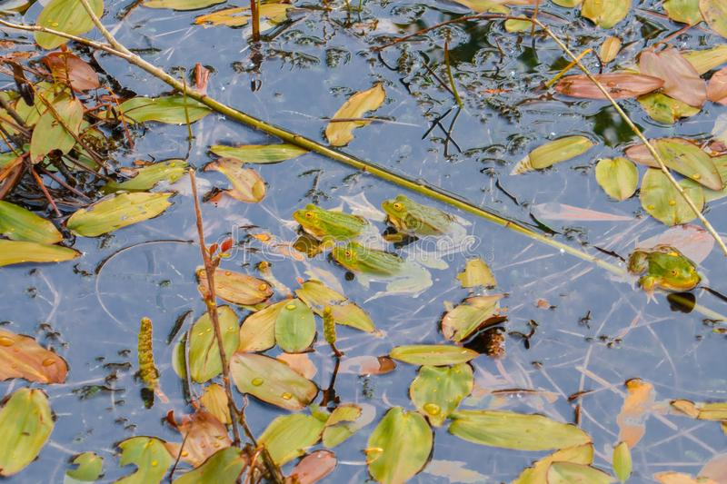 Leaf, Water, Yellow, Flora royalty free stock photo