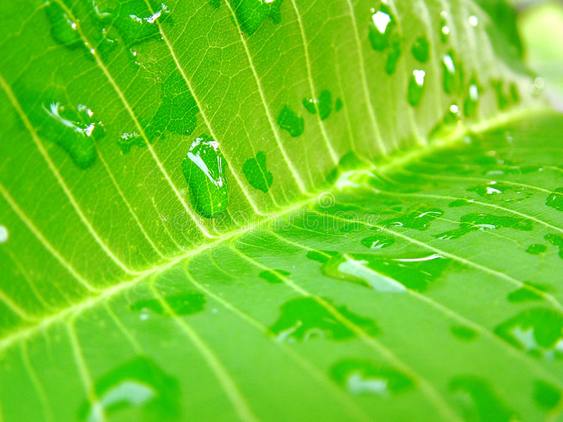 Leaf and waterdrops stock image