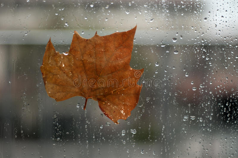 Leaf on wet glass. Autumn maple leaf. Rain drops. royalty free stock images
