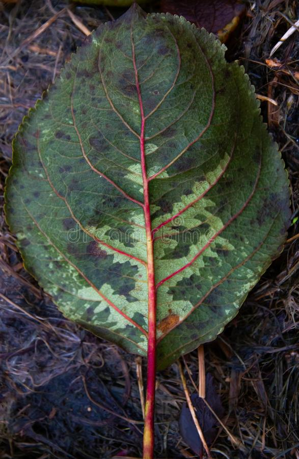 Leaf which fell from a tree to soil. royalty free stock photo