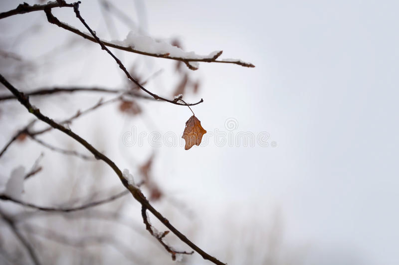Leaf on winter tree royalty free stock photography