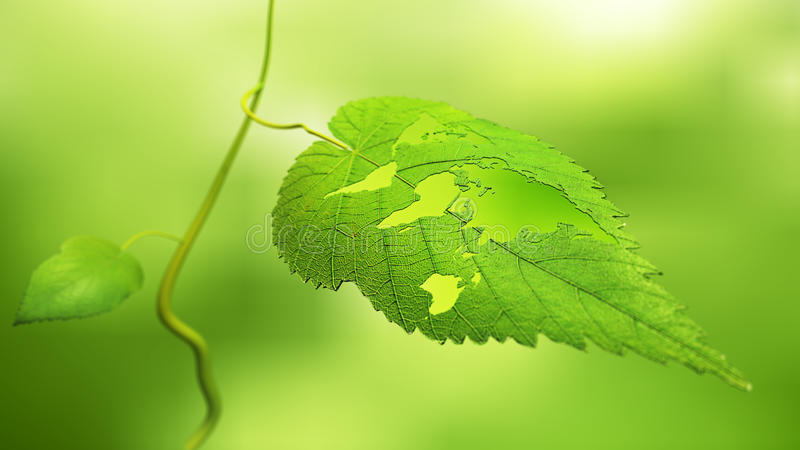 Leaf with a world map stock photos