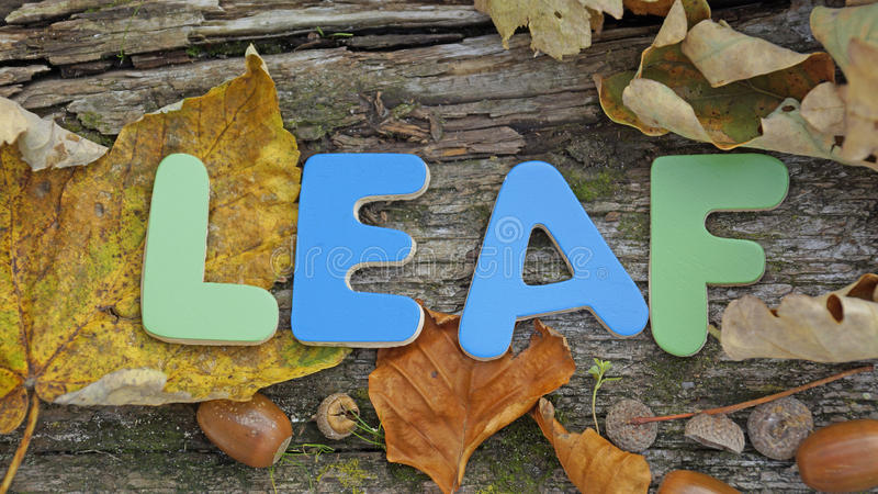 Download Leaf written stock photo. Image of written, leaf, natural - 34758424