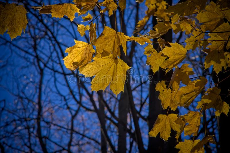 Leaf, Yellow, Nature, Autumn Free Public Domain Cc0 Image