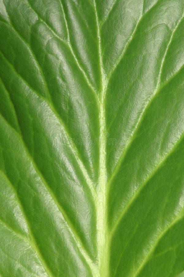 Leaf2 Stock Photos