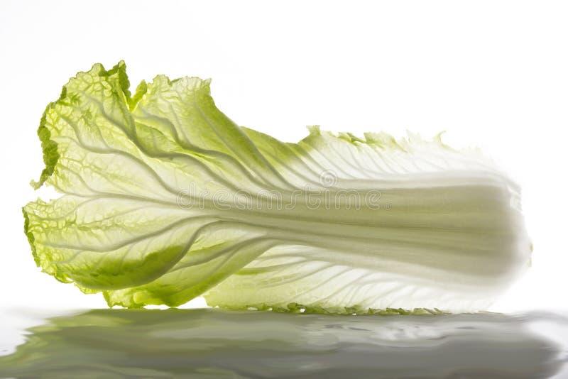 Leafage китайской капусты стоковая фотография rf