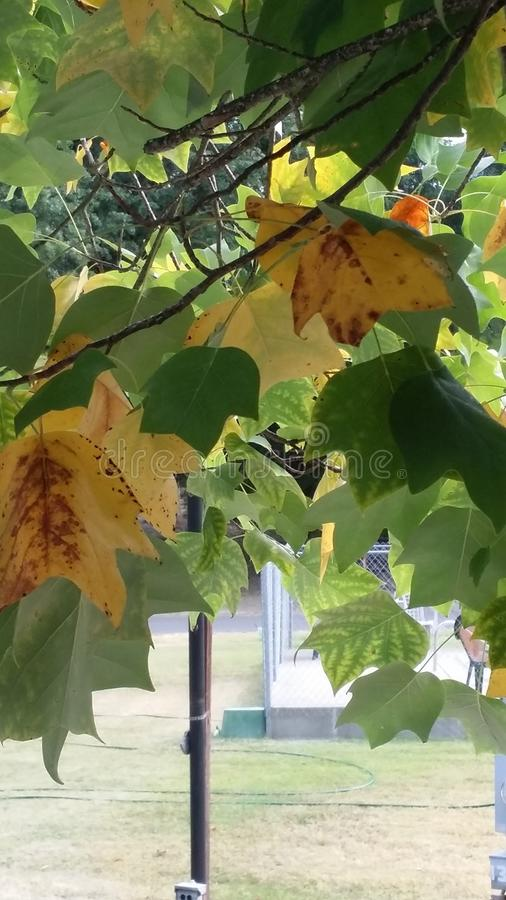 Leafdom royaltyfria foton