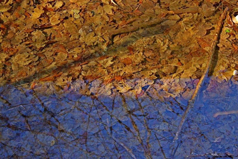 Leafe дерева играя в чистой воде стоковые изображения