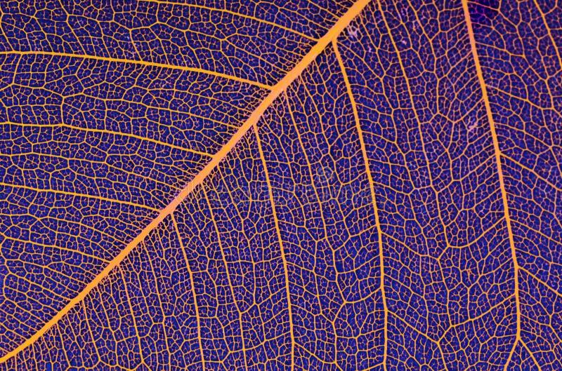 Leafen royaltyfria bilder