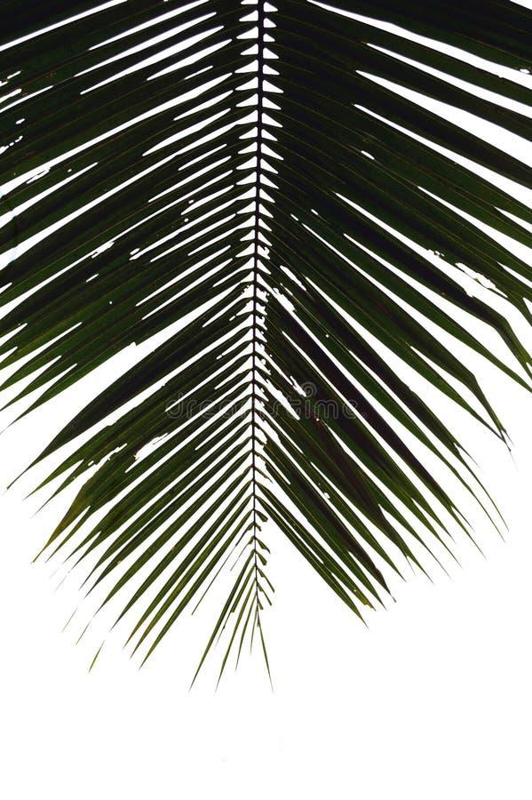 Download Leafen gömma i handflatan arkivfoto. Bild av växt, fine - 510544