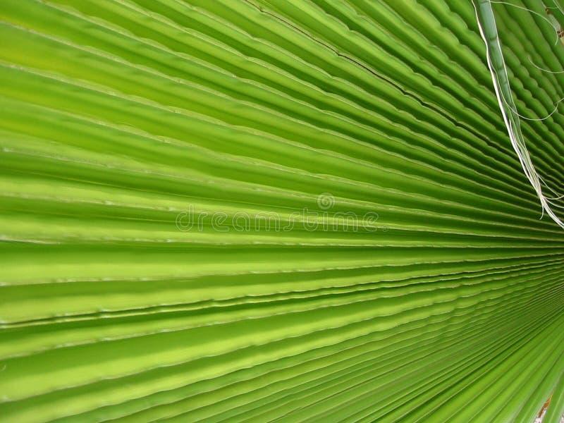 leafen gömma i handflatan arkivfoto