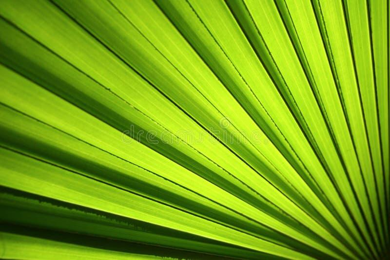 Download Leafen gömma i handflatan arkivfoto. Bild av form, diagram - 995796