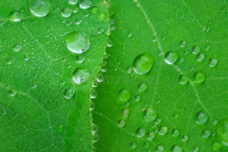 Leafes. Water drops on surface and leaf edge royalty free stock images