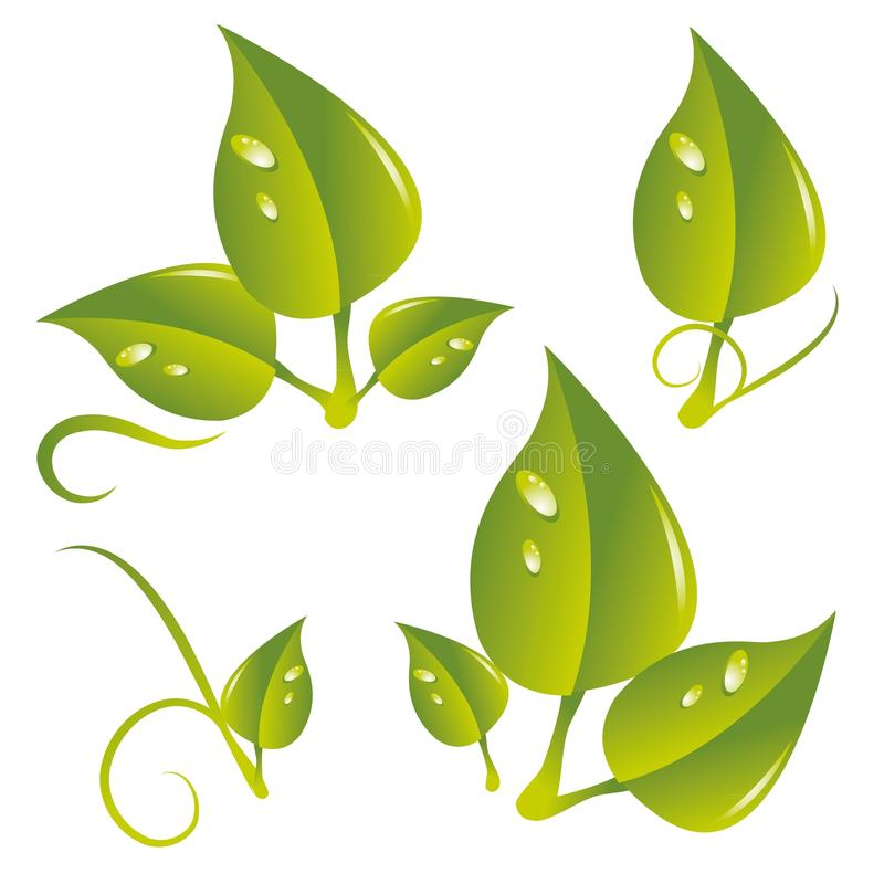Leafes. A set of different leaf with dewdrops stock illustration