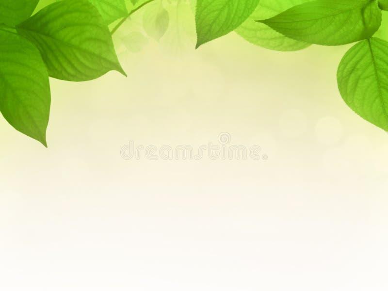 Leafes verdes antes del fondo de la pendiente foto de archivo libre de regalías