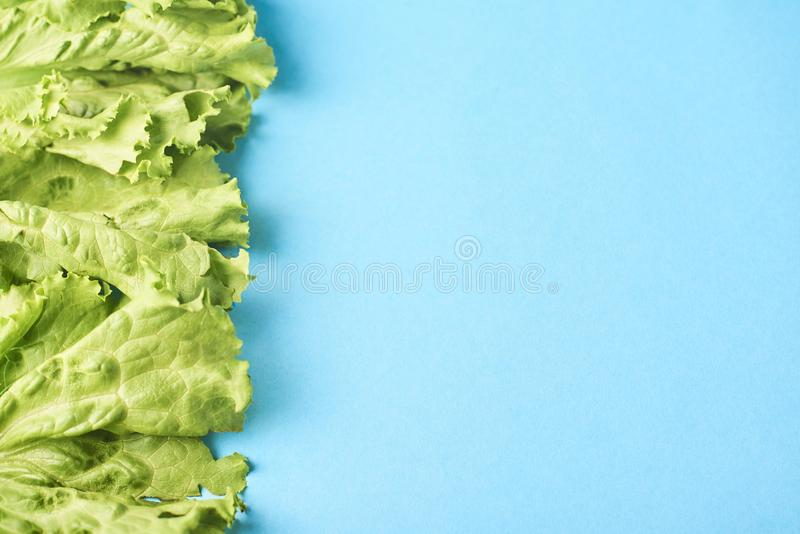 Leafes verdes frescos da alface isolados na turquesa fotografia de stock royalty free