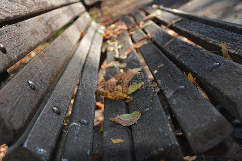 Download Leafes on a wood banch. stock photo. Image of perspective - 88764766