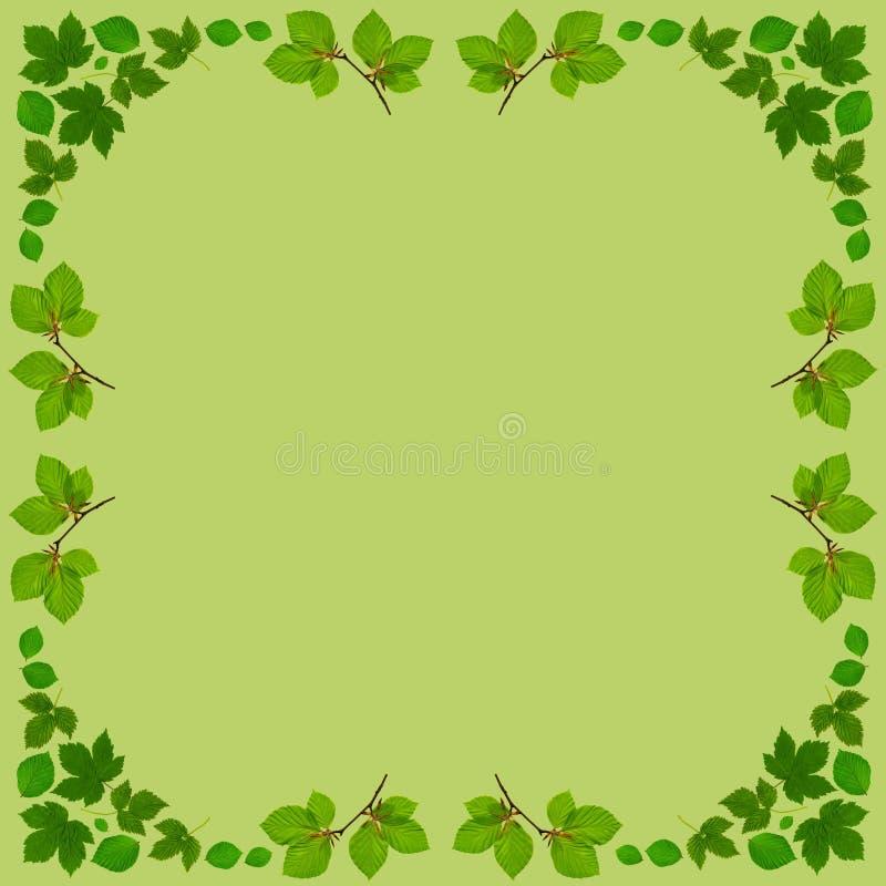 LeafFrameSquareGreen illustration de vecteur