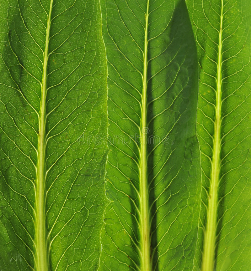 leafgrönsaker royaltyfri foto