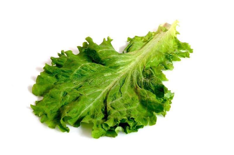 leafgrönsallat arkivbild