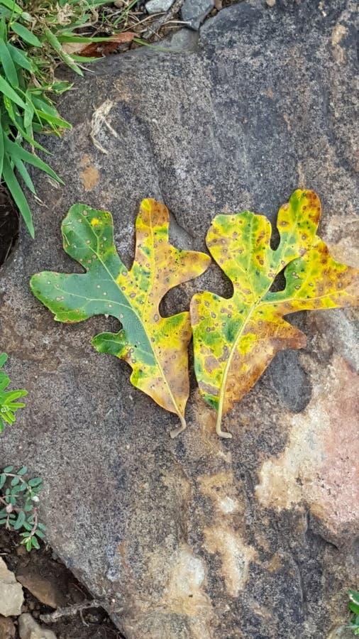LeafHeart zdjęcie royalty free