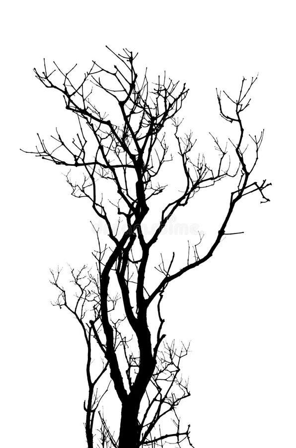 Leafless abstracte achtergrond van boomtakken stock foto's