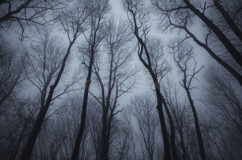 Leafless bomen in donker achtervolgd hout royalty-vrije stock foto
