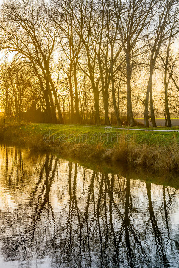 Leafless branches reflected in a mirror smooth water surface royalty free stock photography