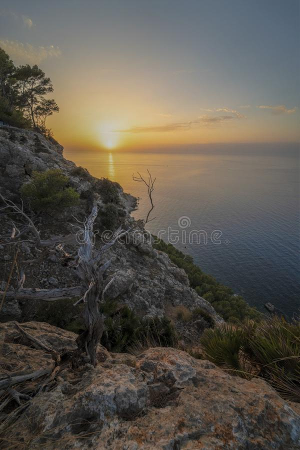 Coastal landscape sunset with a leafles tree royalty free stock photography