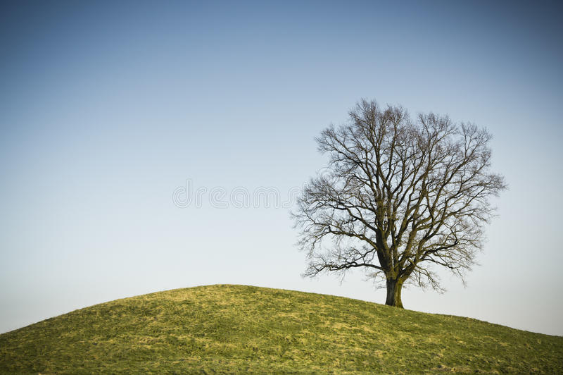 Leafless tree. An image of a leafless tree on a hill royalty free stock photography