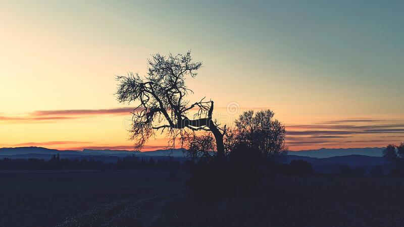 Leafless tree against sunset royalty free stock images