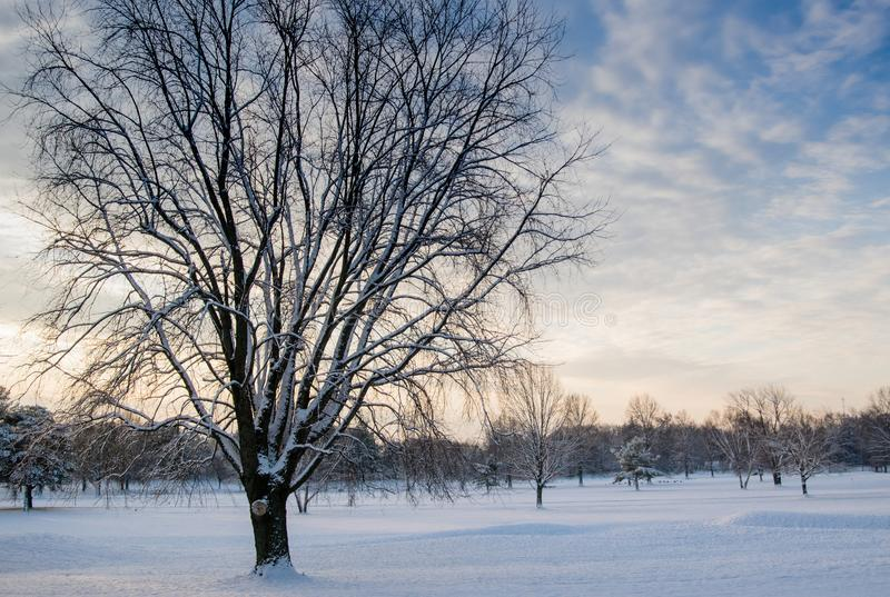 Leafless Tree Covered in Snow royalty free stock photography