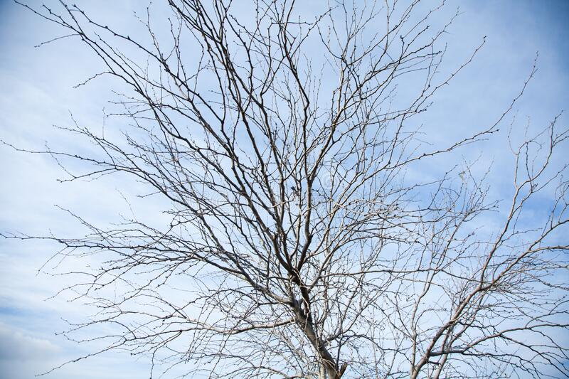 Leafless tree in fall stock image