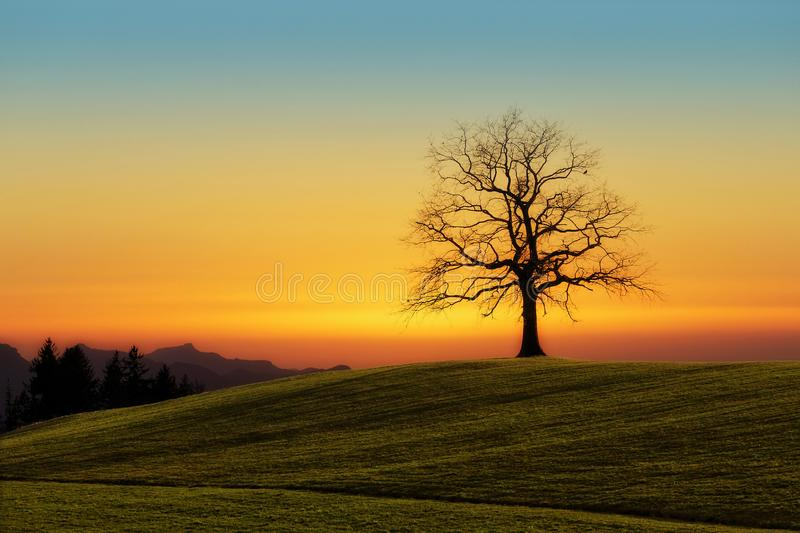 Leafless Tree On Grass Field stock photography