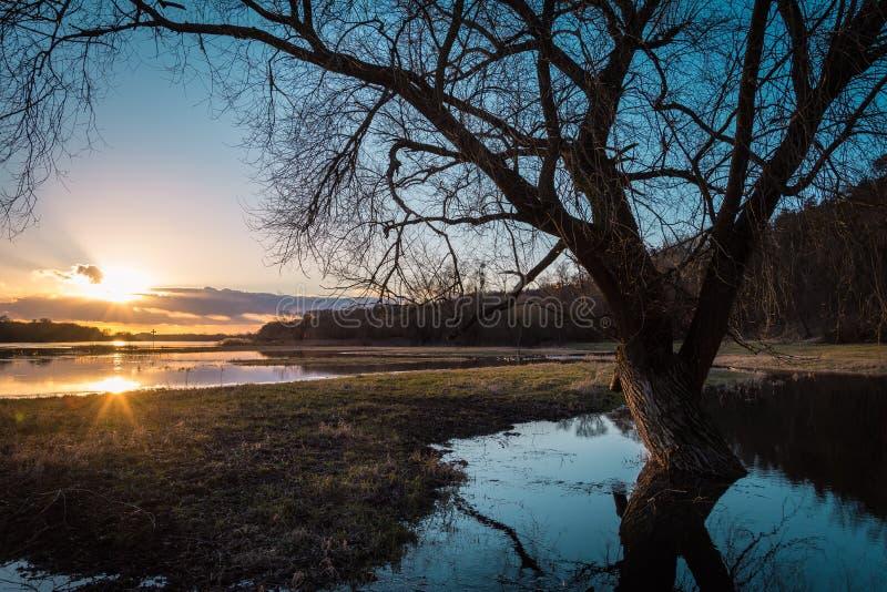 Leafless tree on lake coast at sunset stock images