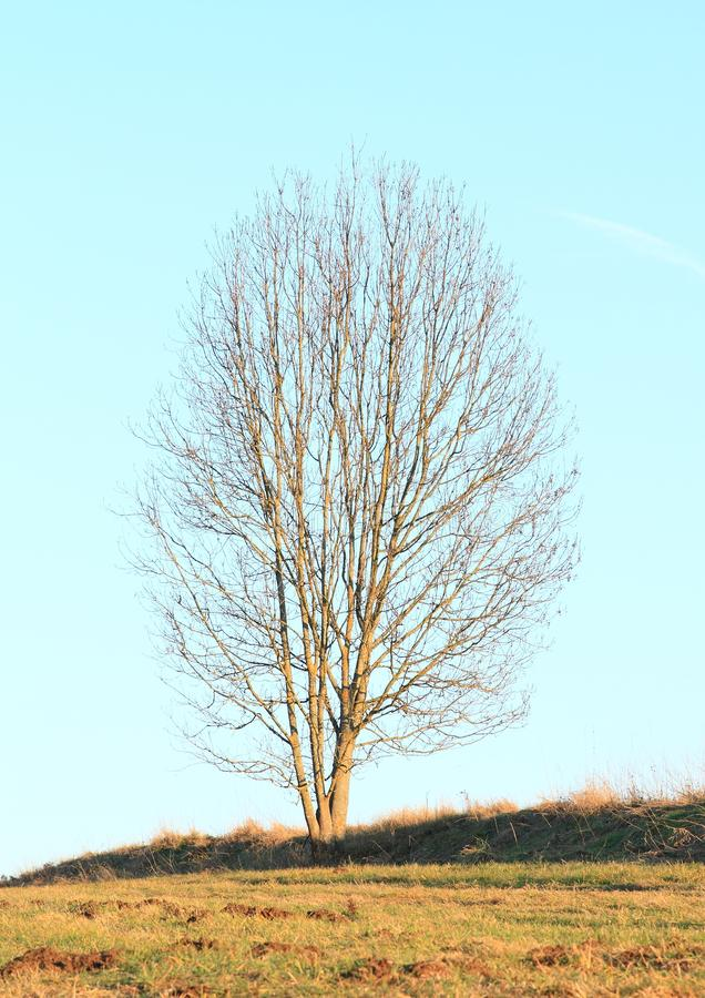 Leafless tree on meadow stock images