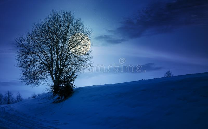 Leafless tree on snowy slope at night stock photo