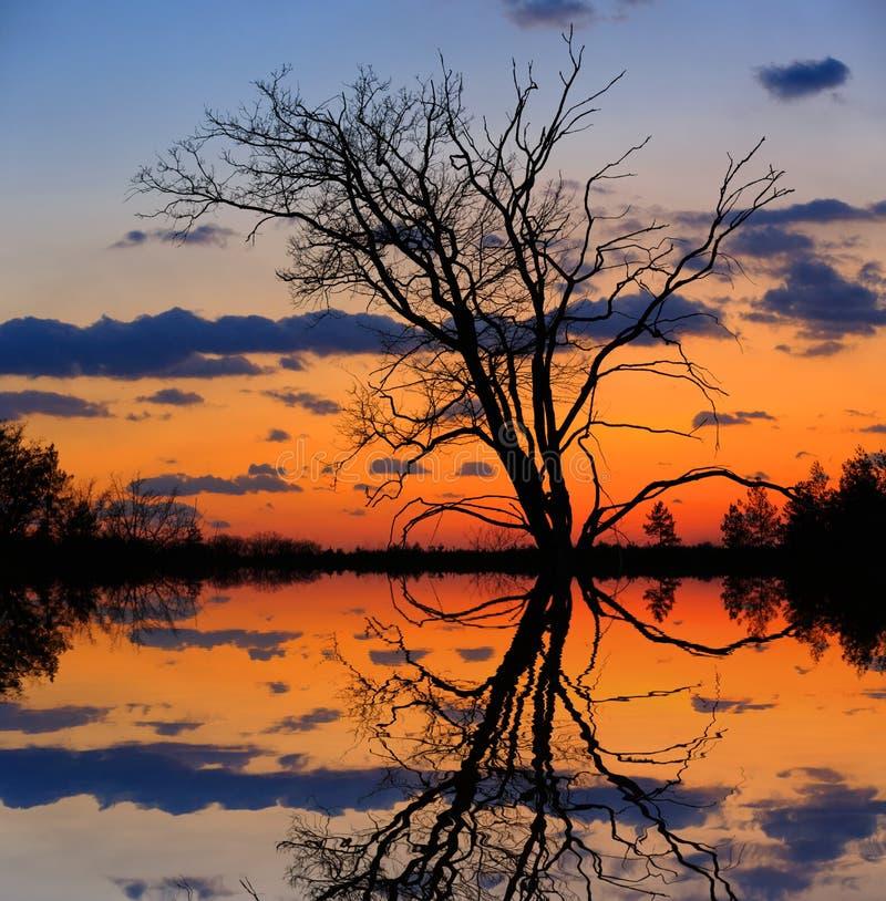 Leafless tree on sunset background. Near lake stock photos