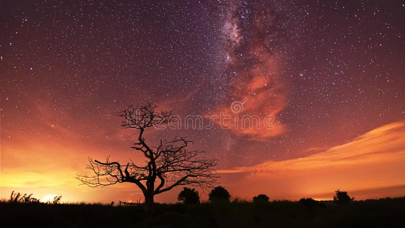 Leafless tree at sunset royalty free stock photo