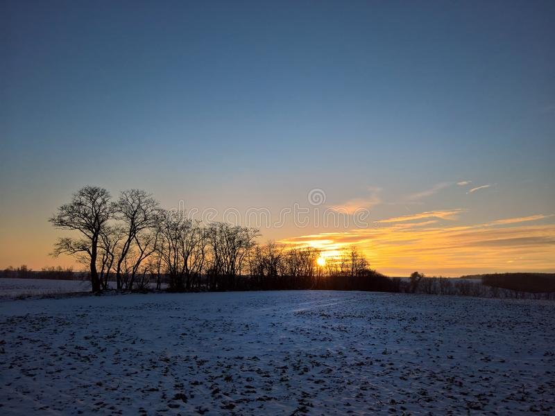 Leafless tree at the sunset in the winter.  royalty free stock photos