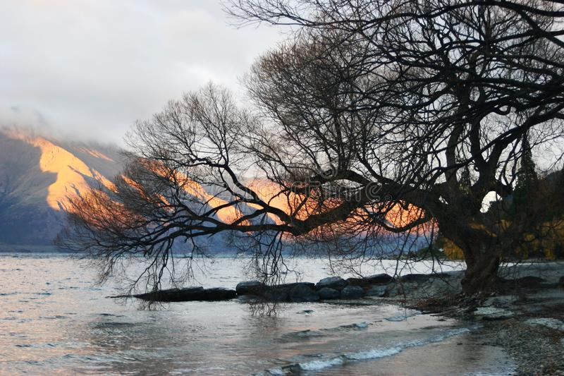 Leafless tree on waterfront and orange lit mountains at daybreak in winter royalty free stock photos