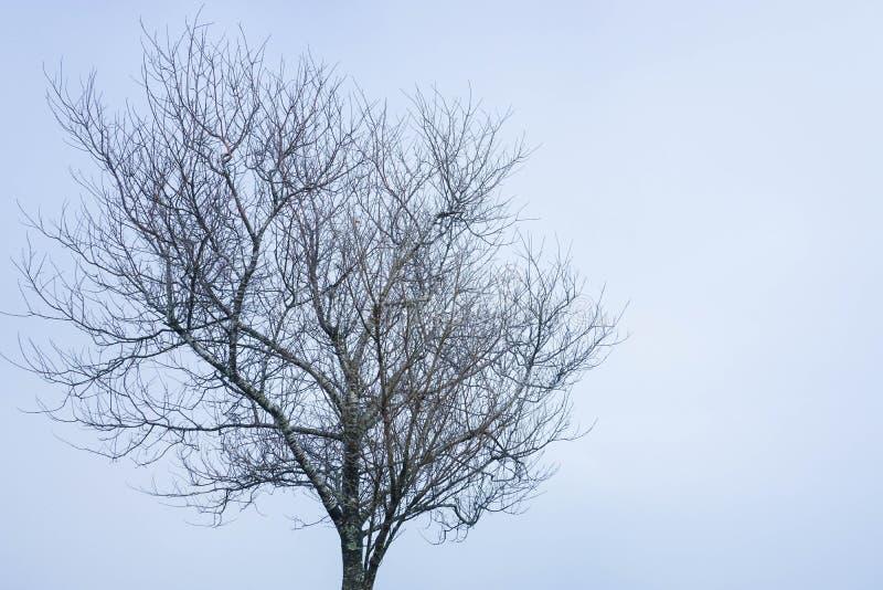 Leafless tree in the winter. Season stock photos